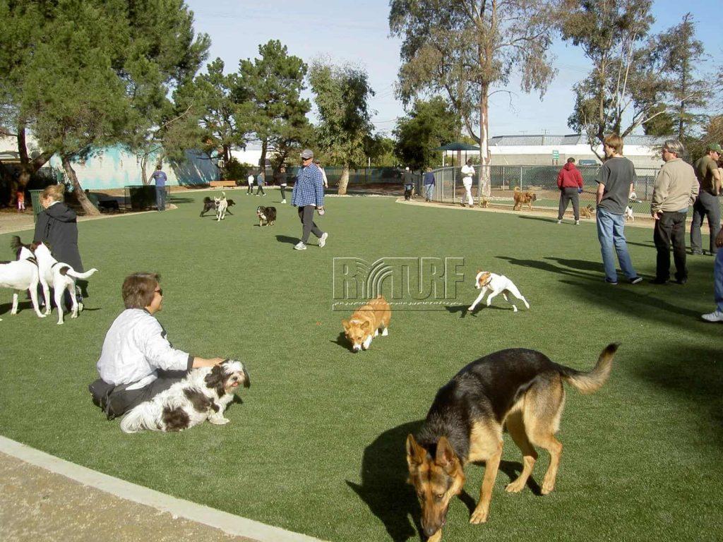 Pet activity area